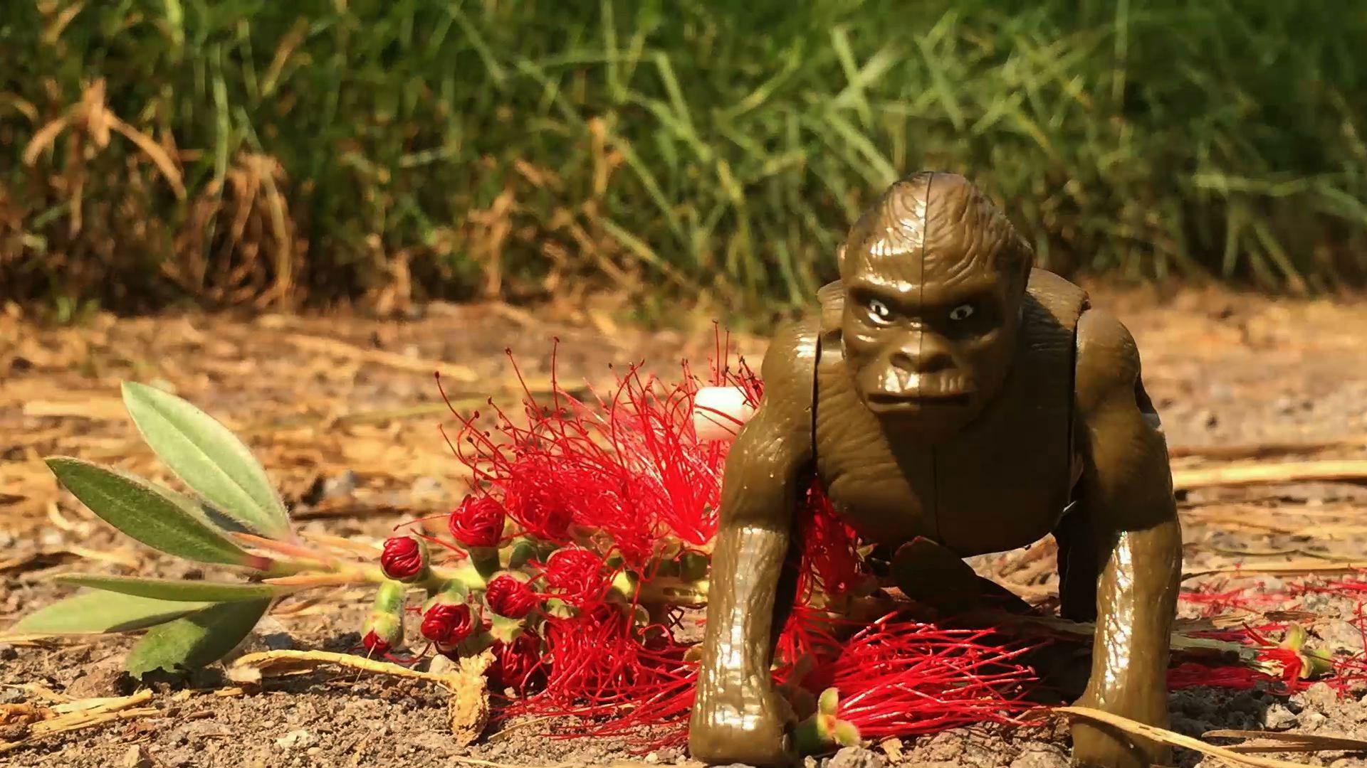 Abenteuer mit dem traurigen Affen – 4