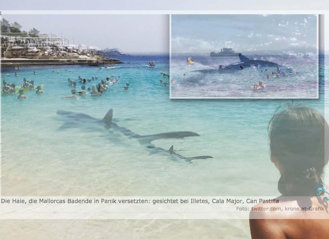 Die Krone photoshoppt sich den größten Hai